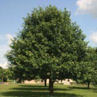 Landscape and Lawn care San Antonio Texas