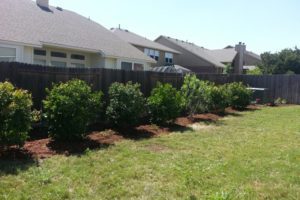 Landscape and Lawn care San Antonio Texas