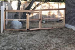 New wood fence construction and sod installation