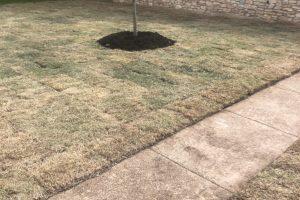 new sod installed in yard