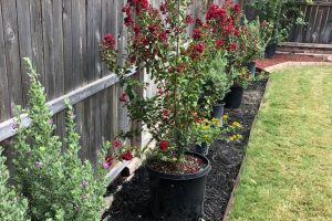 landscaping project with flowers and bark along fence line